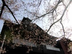 『吉田屋』前の桜。半露天風呂付客室からも桜を楽しめます☆桜を眺めながら嬉野湯をご堪能ください♪