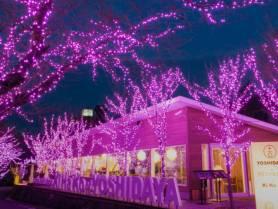 吉田屋イルミネーション。只今、開催中!~2018年1月31日まで。